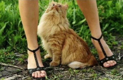Ножки и кот :)
