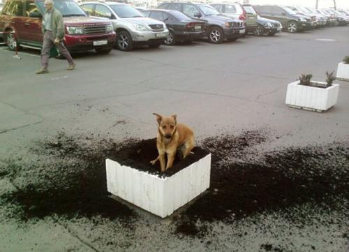 Вот собака :)