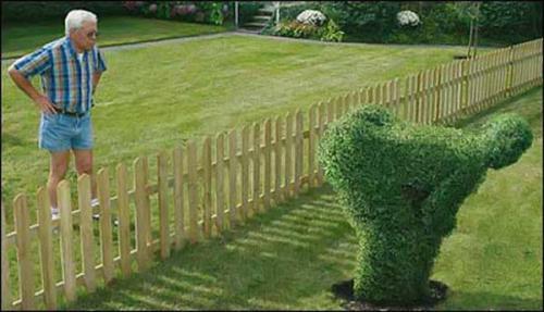 Куст для соседей :)