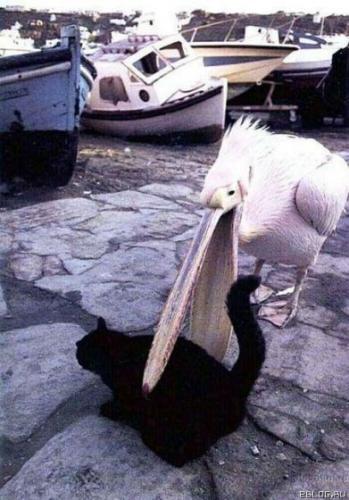 Птицы атакуют