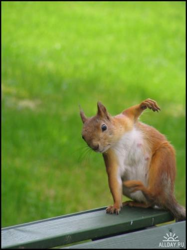1204600580_orava___a_squirrel_by_tng05.jpg